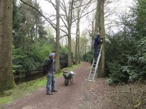 Het onderhouden van de nestkasten op Groenendael